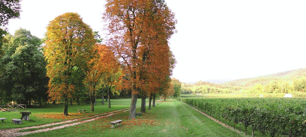 Villa Mosconi Bertani - Parco dei Poeti